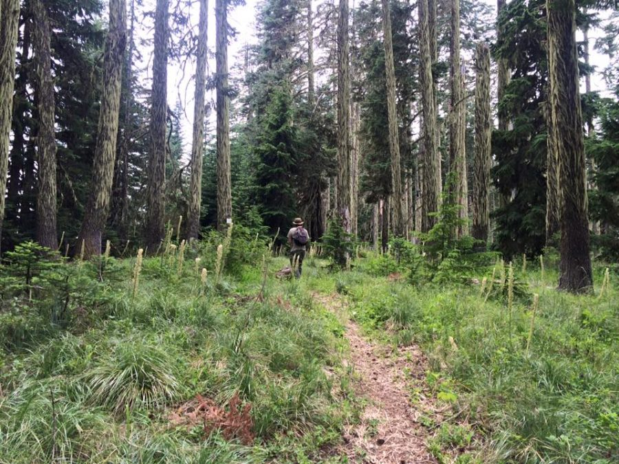 Traditional Roots Institute   Dr. Kurt Beil   forest bathing   shinrin-yoku