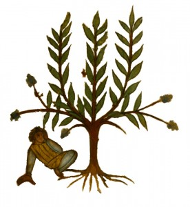 Plant and man 276x300 The Legacy of Greece to Modern World Medicine