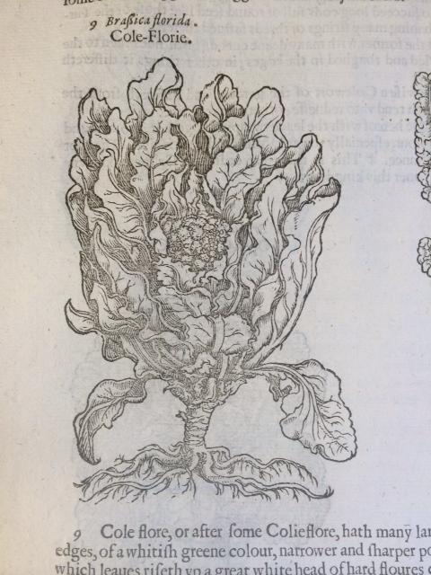 """""""Brassica florida. Cole-Florie."""""""