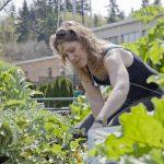 Elderberry Elixir | Alexis Durham | Traditional Roots Institute | DIY Medicine