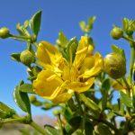 Herbal First Aid | Greta de la Montagne | Herbal Medicine | Traditional Roots Institute